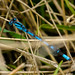 Dragonfly in grass