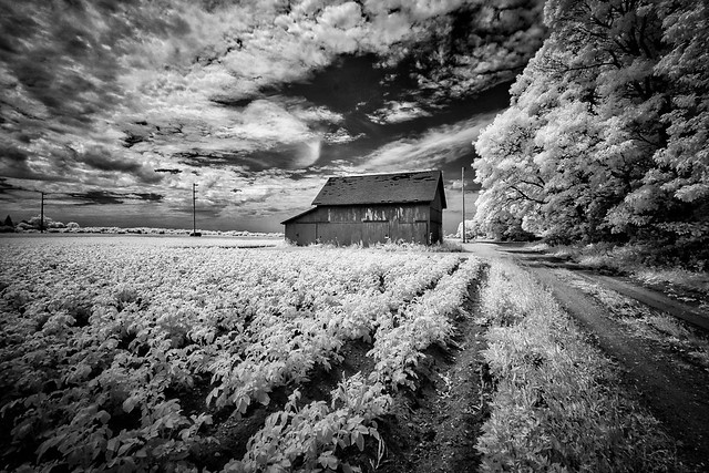 A favorite barn on the north fork, Long Island, NY,USA