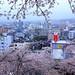 曉看紅濕處,花重錦官城 ~ Tsuyama (津山市) surrounded by sakura cherry blossoms @ Tsuyama , Okayama 津山城城跡  ~