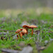 Fungi by ♥ saj255 ♥