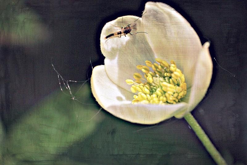 fleur visitée