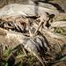 bones & feathers III