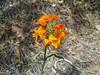 spring_flowers_2
