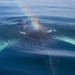 humpback whale spouting a rainbow by nervous system
