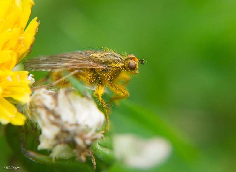Barbouillé de pollen 16749114734_5321f4b059_o
