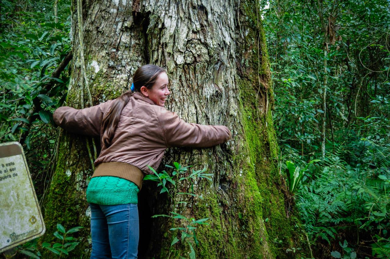 Una funcionaria del complejo hotelero de la Reserva del Mbaracayú abraza a uno de los árboles más antiguos del bosque durante un paseo guiado, enseñando a los visitantes la importancia del cuidado de los bosques nativos. Las personas que se encargan de las charlas son estudiantes del centro educativo Mbaracayú, institución que reúne a jóvenes y los instruye en materias de agronomía sustentable, turismo interno y hotelería. (Elton Núñez)