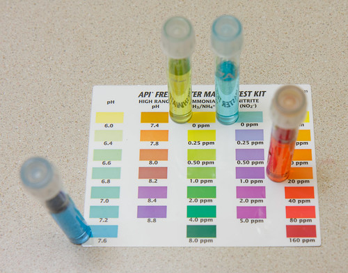 results from an api freshwater test kit showing 0 ammonia and 0 nitrite