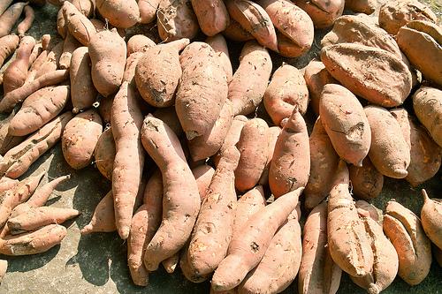 番薯。圖片來源: IAN Chen
