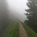 The trail... by aniko e