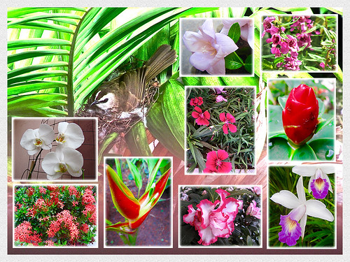 Collage of Bulbul and our garden beauties