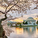 Jefferson and Cherry Blossoms at Sunrise by John Baggaley