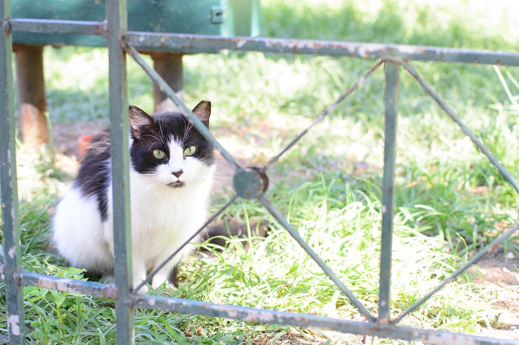 Yuru-fuwa cat