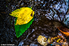 leaves in creek 2.jpg