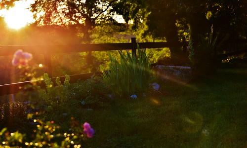 soir evening rayons rais soleil sunset coucherdesoleil atardecer fleurs flowers jardin garden août2016 lumière light
