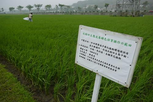 水稻田生態友善綠色保育示範田與掃網工作人員(陳安蓓攝)
