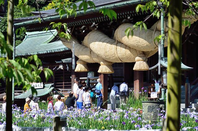 宮地嶽神社・菖蒲まつり Miyajidake shrine