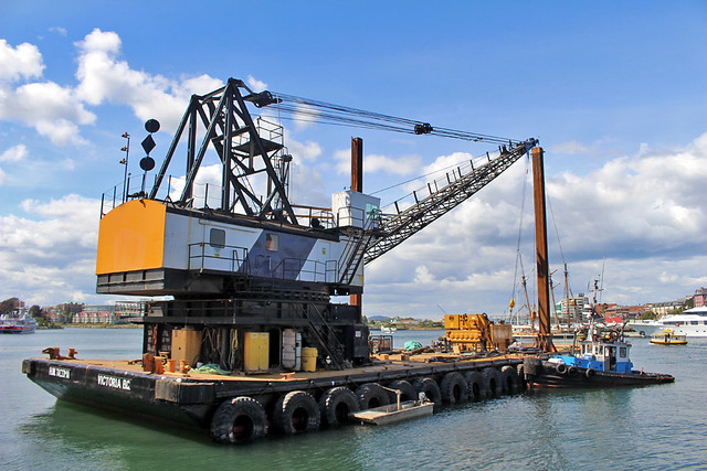Vancouver Island Crane