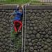 HANG ON SLOOPY by Georgie Pauwels