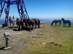 Cumbre de Gorbeia (1.482 m.) en pleno verano