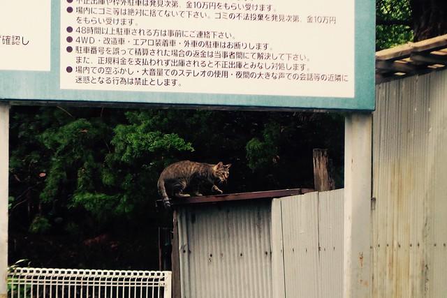 Today's Cat@2016-09-13