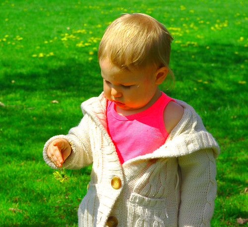 charlotte with dandelion 2