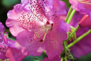 Pink Macro Gora