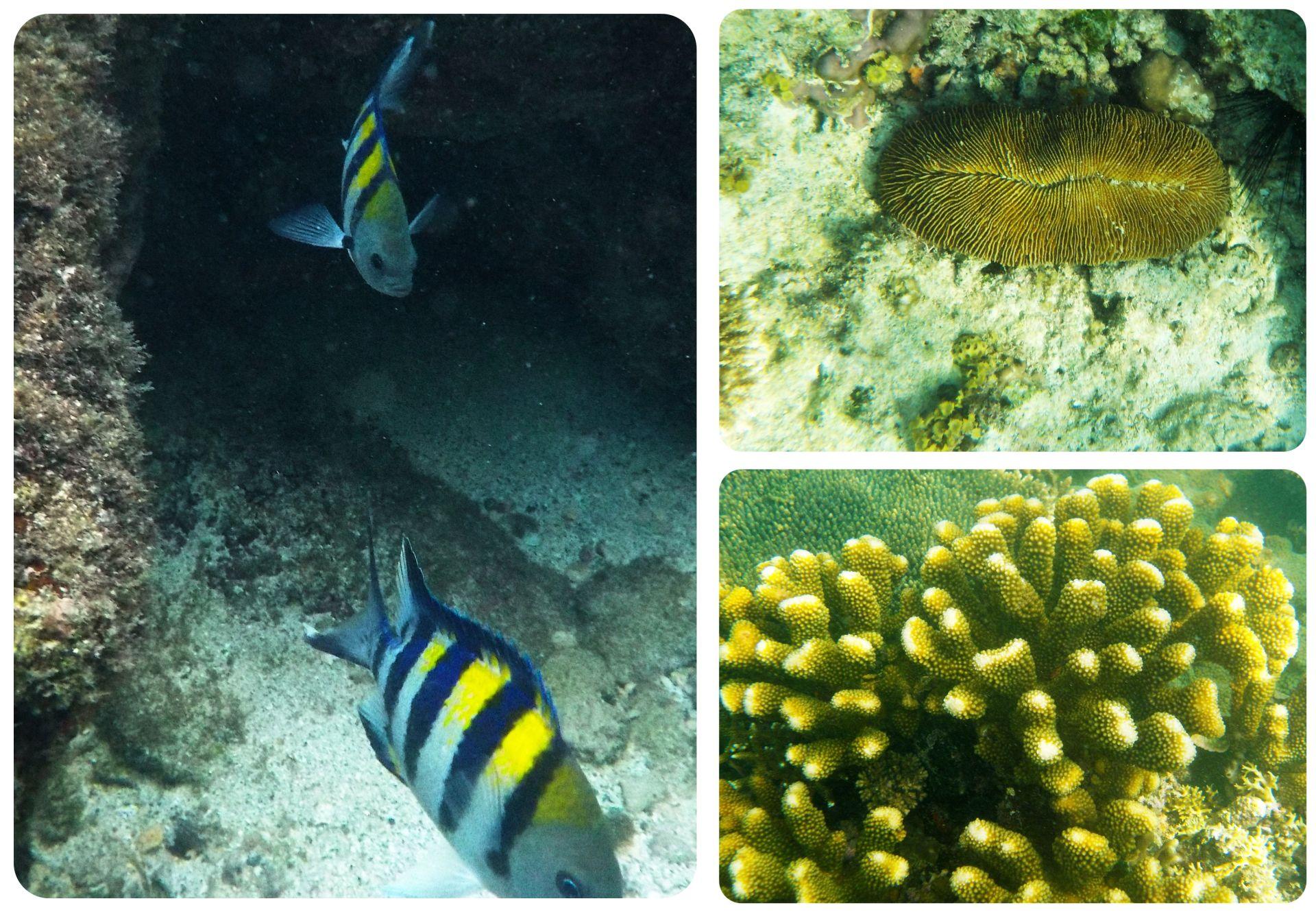 El Nido underwater
