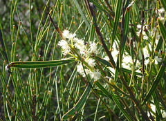 NativeFlora1