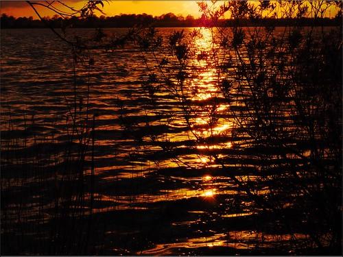 sunset lake reflections see eveninglight goldenlight spiegelungen pönitzersee sonnenuntergangamsee