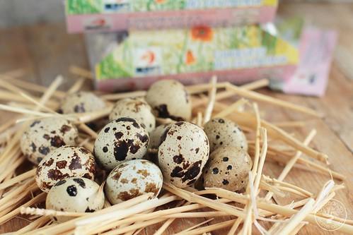 Huevos de codorniz a la escocesa www.cocinandoentreolivos.com (1)