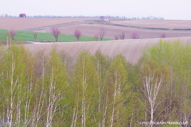 桜のある丘風景3