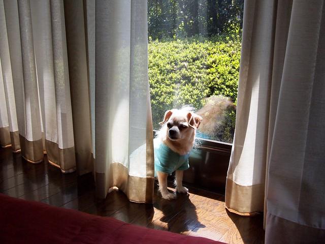 2015.5.5 日向ぼっこ犬