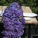 Hydrangeas-— Leanne and David Kesler, Floral Design Institute, Inc., in Portland, Ore.