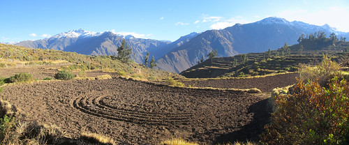 Trek du Cañon de Colca: les terrasses de Cabanaconde