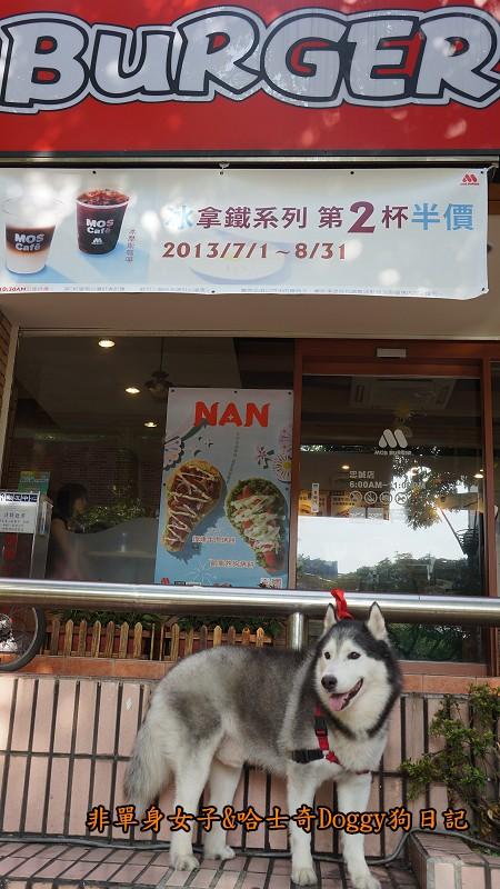 哈士奇Doggy2013陽明山二子坪04