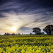 A Golden Evening In Northamptonshire (2015-04-23) by snjscuba
