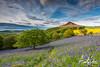 Bluebell Woods. Roseberry Topping