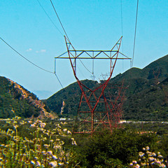 flower, mountain, tree, overhead power line, transmission tower,