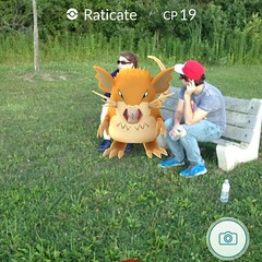 @nikkicholo and @brandontaylor4  #chattingitup as if its #normal to have a #raticate between you! #pokemongo #pokemon #park#lure #july#2016#july2016