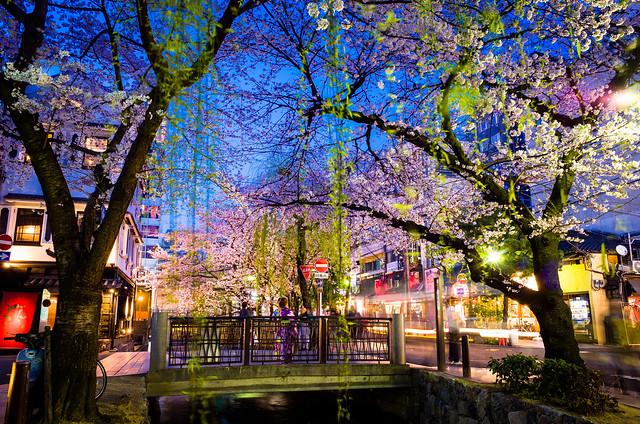 sakura '15 - cherry blossoms #16 (Kiyamachi street, Kyoto)