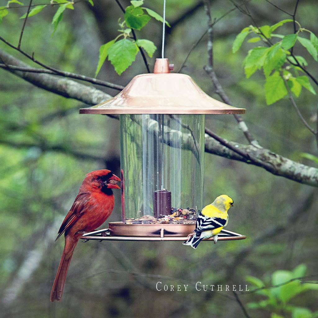 bird feeder blog