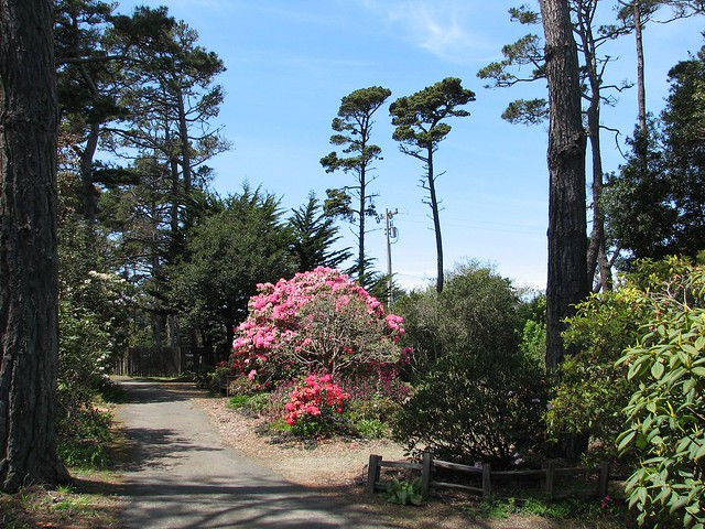 Rhododendrons Flickr Photo Sharing