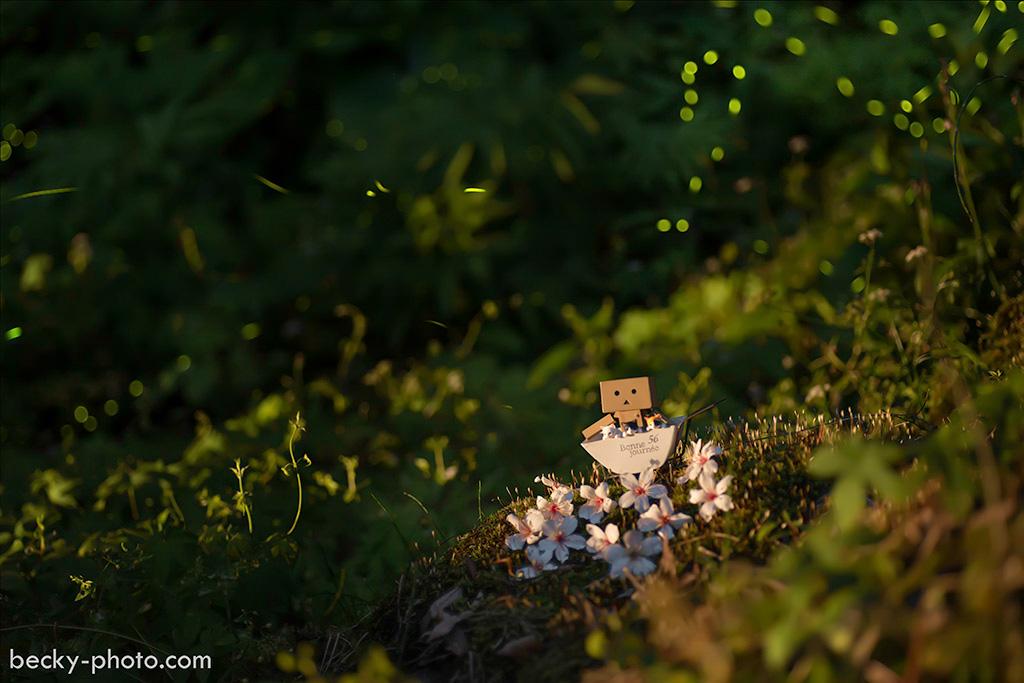 2015.May Fireflies @Taichung 新社頭櫃螢火蟲.桐花