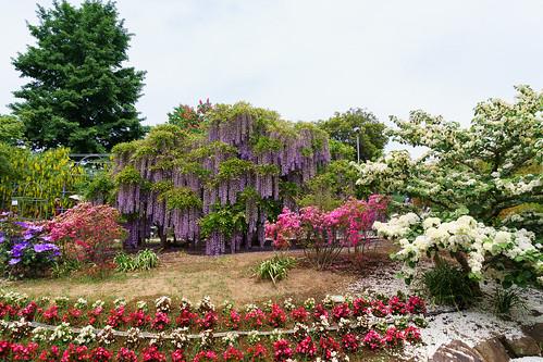 あしかがフラワーパーク (Ashikaga Flower Park)