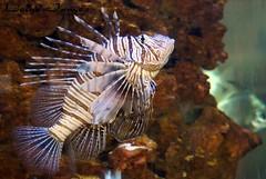 Tropical fish 01 CoZ 16052015