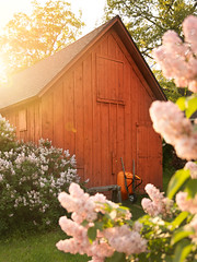 Lilacs and a Sweet Barn/Garage