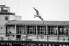 Seabird at Bournemouth beach