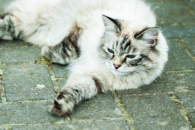 As every cat owner knows, nobody owns a cat. (Ellen Perry Berkeley)