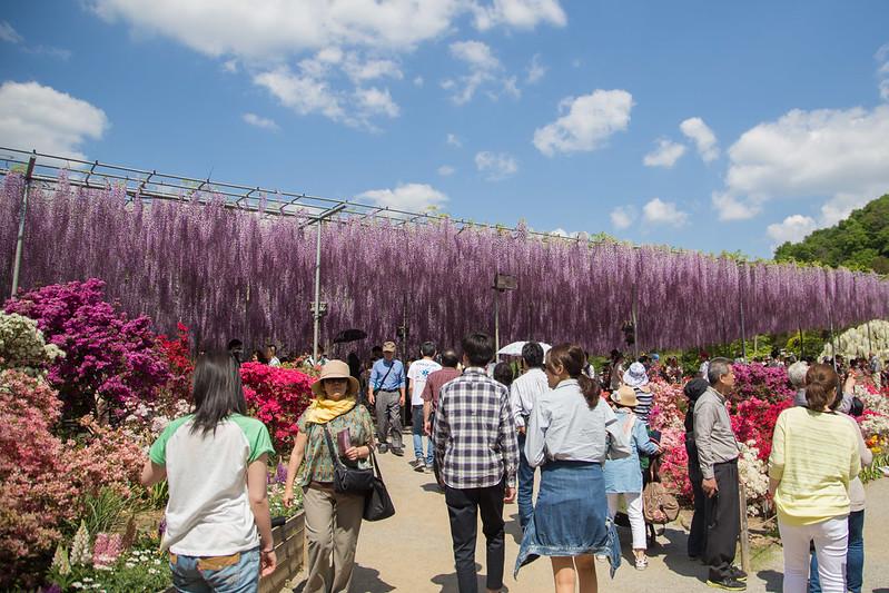 ashikaga_flowerpark-7