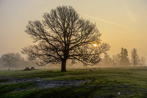 mist sheep earlymorning sunrise